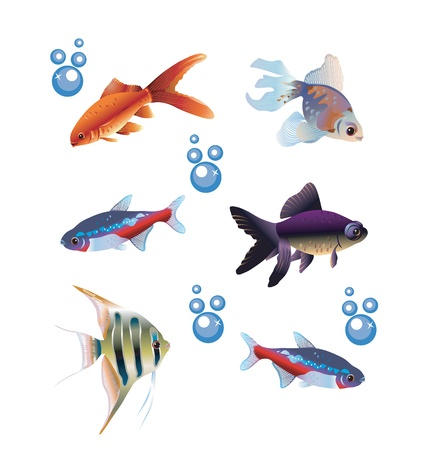 Colorful vector pack of six different fishes and bubbles
