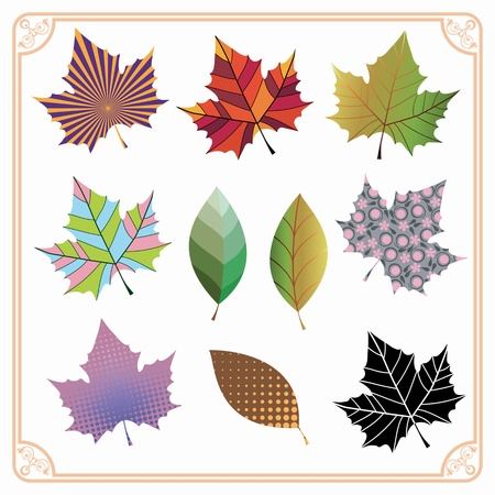 Colorful variety of different maple leaves inside ornamented frame Çizim