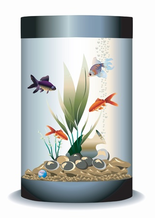 Aquarium with four gold fishes and water plant