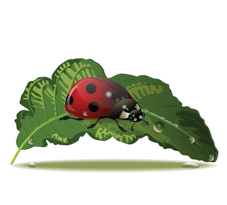 eps 10 Vector ladybug on a green leaf with water drops Stok Fotoğraf - 23012562