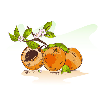 Vector illustration of cartoon apricot with the blossom branch Ilustração