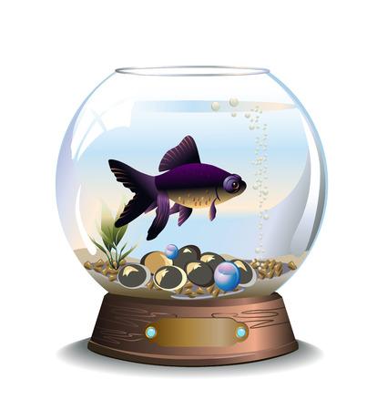 Vector illustration of round aquarium with telescopfish, pebbles and waterplant Stok Fotoğraf - 36761827