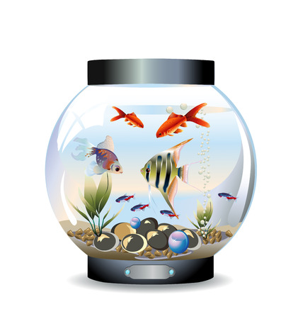 fishes: Vector illustration of round aquarium with fishes, pebbles and water plants