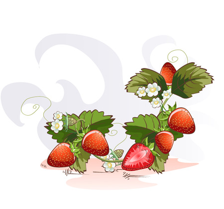 Vector illustration of cartoon strawberry with blossom branch