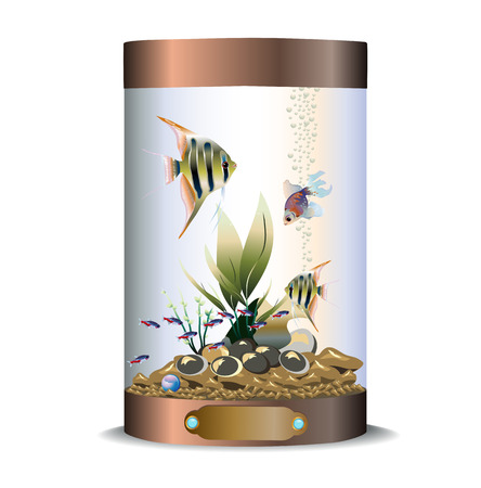 Vector illustration of of cylindric bronze aquarium with fishes, pebbles and waterplants Çizim