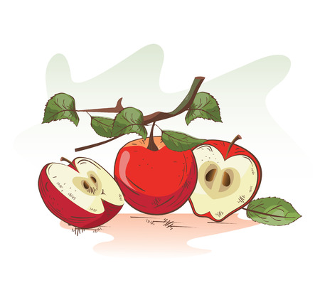 Vector illustration of cartoon apple branch and slices