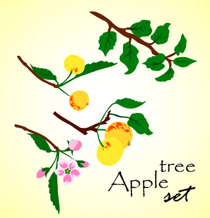 botton: Beautiful vector illustration of apple tree set. Set of branches, leaves and flowers for apple tree.