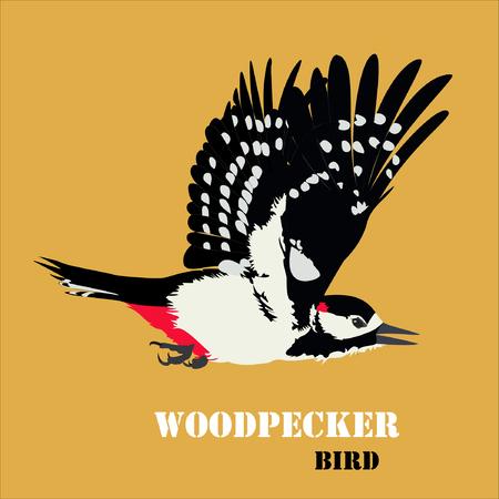 Vector illustration of woodpecker bird