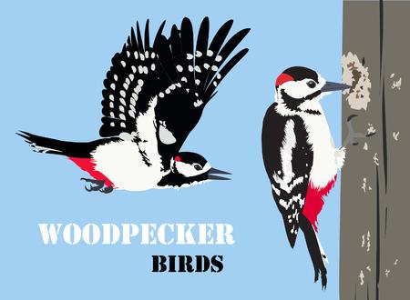 Vector illustration of woodpecker birds.