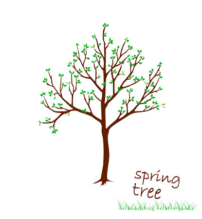 brash: Vector illustration of spring tree with leaves on whie background.