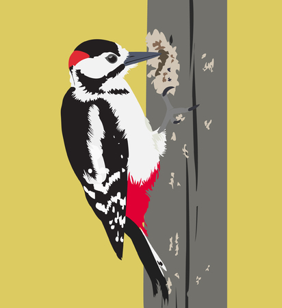 nice body: Vector illustration of flying woodpecker bird on a tree trunk.