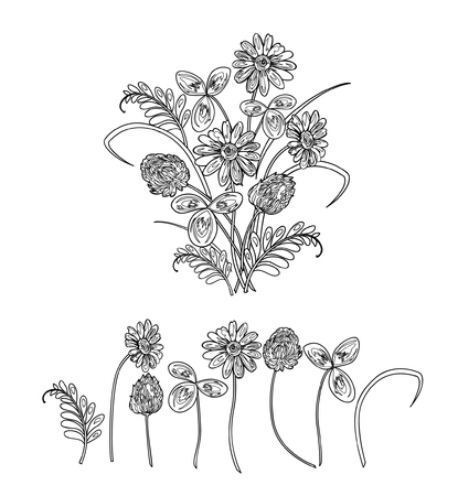 clover buttons: Vector illustration of bouquet made from wildflowers. Clower, trefoil, chamomile and green grass. Black and white sketch.