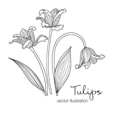 Vector illustration of tree beautiful tulips flowers. Black and white sketch. Hand drawn.