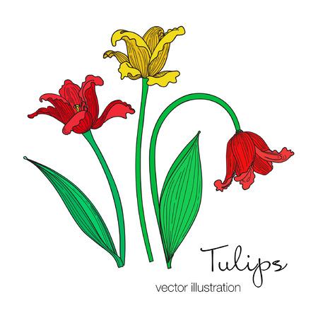 Illustration of colorful tulips flowers. Çizim