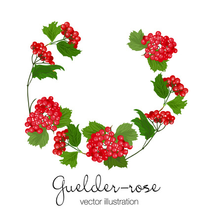 Vector illustration of guelder-rose branches in wreath. Red berriees, green leaves on white background.