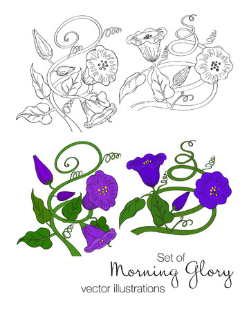 Vector illustration of morning glory flowers. Set of black and white sketch and colorful hand drawn flowers. Çizim