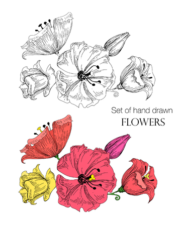 Vector illustration of beautiful hand drawn flowers sketch. Colorful and black white flowers on white background.
