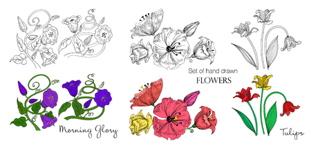 Set of hand drawn flowers in sketch and colorful version. Tulips, morning glory and other beautiful flowers. Vector illustration. Çizim