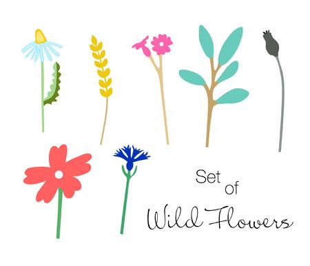 Set of colorful wild flowers. Hand drawn poppy, chamomile, bells, cornflower, wheat and tree branch. Vector illustration. Çizim