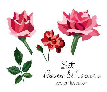 Set of pink and red roses and green leaves. Hand drawing. Vector illustration.