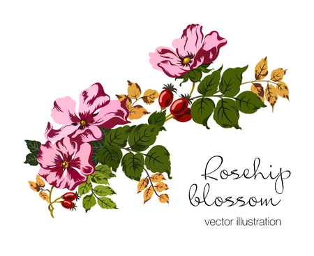 Vector illustration of rosehip berries and blossom. Red berries and pink flowers on green leaves branch. Hand drawn.