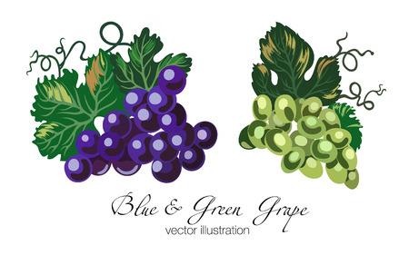 Vector illustration of blue and green grapes