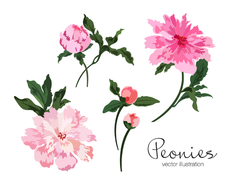 Set of light pink peonies flowers with green leaves. Hand drawn. Vector illustration. Çizim