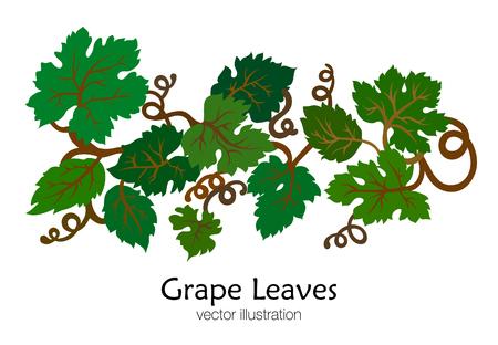 Branch of green grape leaves. Hand drawn. Vector illustration. Çizim