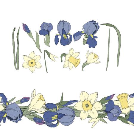 Set aus nahtlosem Rand von Iris und Narzisse und isolierten Blumen