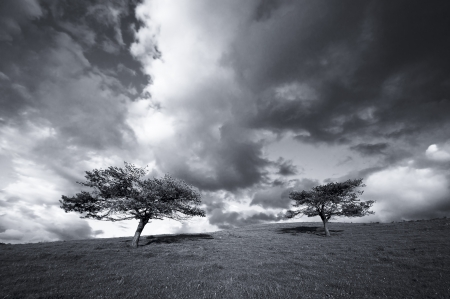Two trees in the field and the clouds in black and withe