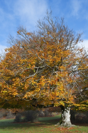 tree in the Urbasa mountain with autumn leaves