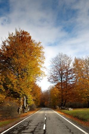Tree-lined road in Urbasa, Navarre