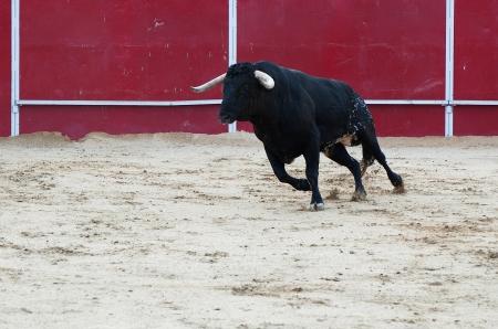 Schwarzer Stier l�uft in der Stierkampfarena Lizenzfreie Bilder