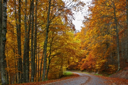 navarra: Tree-lined road in Irati, Navarre Stock Photo