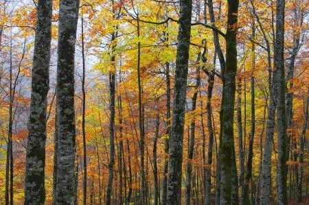 autumn trees Stock Photo - 15569196