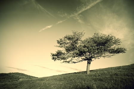 sepia toning: Lonely tree in the field and clouds in the sky, on sepia toning