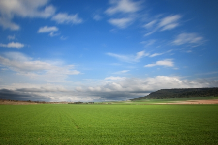 Cereal cultivated fields and blue sky with moving clouds