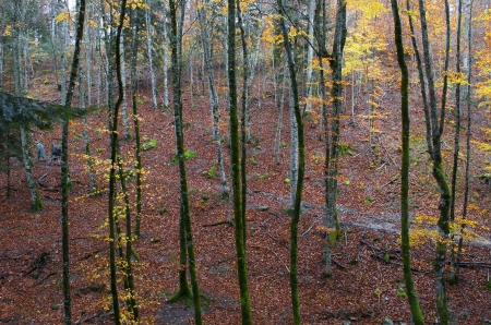 Pfad in den Wald mit Herbstlaub