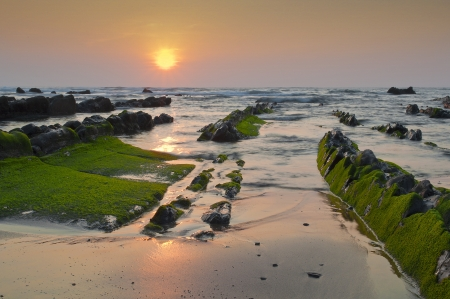 Green algae in the rocks, at sunset in Barrika beach, Spain photo