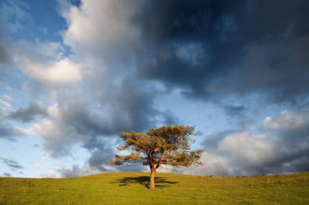 lonely tree in the field and cloudy sky photo