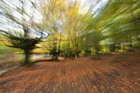 zooming: Beautiful forest in autumn with zooming effect Stock Photo