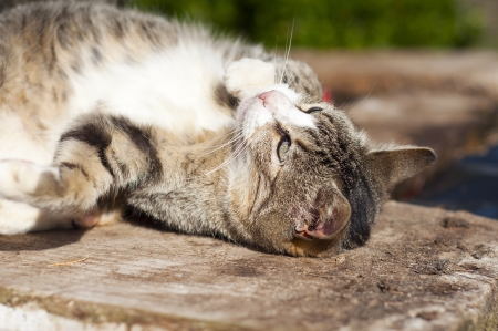 brindle colored kitten playing in the sunshine Stock Photo