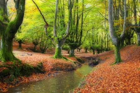 stream through the trees in a beautiful beech forest in autumn, Otzarreta, Spainstream through the trees in a beautiful beech forest in autumn, Otzarreta, Spain photo