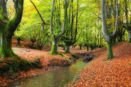 stream through the trees in a beautiful beech forest in autumn, Otzarreta, Spainstream through the trees in a beautiful beech forest in autumn, Otzarreta, Spain Stock Photo - 16928600
