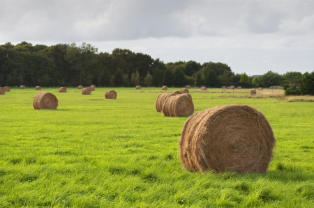 bales of dry grass in the green field, Saint Cado, France Stock Photo - 17348772