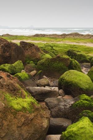 algas verdes: playa con rocas cubiertas de algas verdes