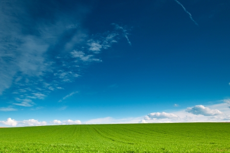 green cereal fields and blue sky