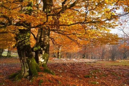 Baum in der Urbasa Berg mit Herbstlaub