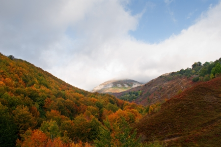 view of the mountain trees with fall colors, Burgos, Spain Stock Photo