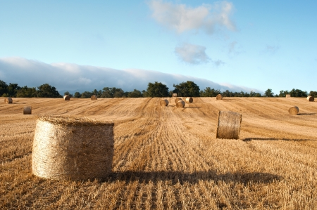 Bales of straw in the wheat fields photo